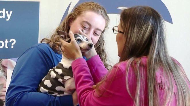 Dutchess, anjing fox terrier ditemukan di Pittsburgh, sekitar 1.609 km dari rumahnya di Florida.